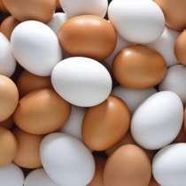 куриное яйцо, в г.Витебск