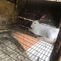 Кролики Калифорнийские, в Хабаровске