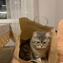 Отдам кота, в Калининграде