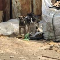Спасите щенков от смерти, в Краснодаре