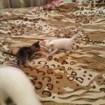 Котята, в Горно-Алтайске