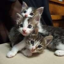 Отдадим котенка (мальчик) 1,5 мес. в добрые руки, в Ижевске