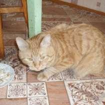 Подарю кота, в Советской Гавани