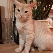 Чудесный Рыжик, молодой ласковый домашний котик, в Москве