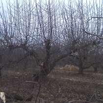 Обрезка и формировка плодовых деревьев, винограда, в Краснодаре