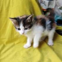 Котята кошки крысолова, в Павловском Посаде