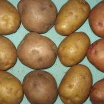 Элитный семенной картофель - почтой, в Москве