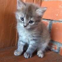 Котята сибирские, в Владимире