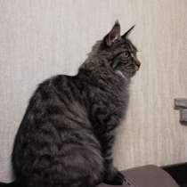Потерялся кот, в г.Зыряновск