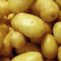 Картофель, урожай 2020, в Каневской