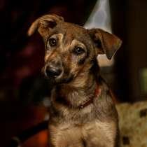 Маленькая собачка Симона в дар, в Москве