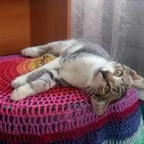 Отдам кошечку серо-тигровой окраски, в Воронеже