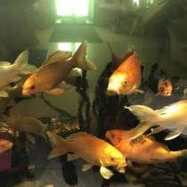 Рыбки аквариумные, в Москве