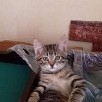 Отдам котят в хорошие руки, в г.Орша