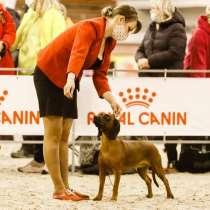 Bavarian mounten hound, в г.Витебск