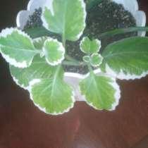 Комнатные растения, в г.Кривой Рог