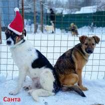 Щенок Санта ищет дом и семью!, в Москве