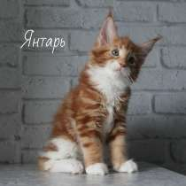 Kittens Maine Coon, в г.Union Grove