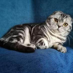 Кот на вязку серебристый мраморный, в Казани