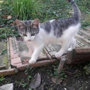 Котята, в Армавире