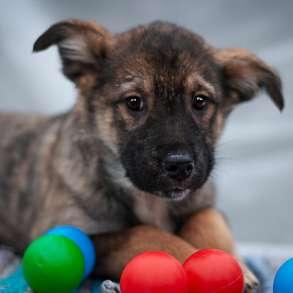 Варенька - милый послушный щенок ищет дом, в Москве