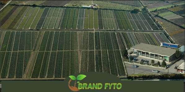 Саженцы яблони, питомники саженцев яблонь в фото 6