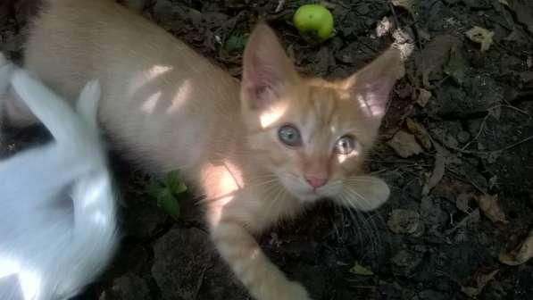 Рыжий котенок,2месяца в Краснодаре