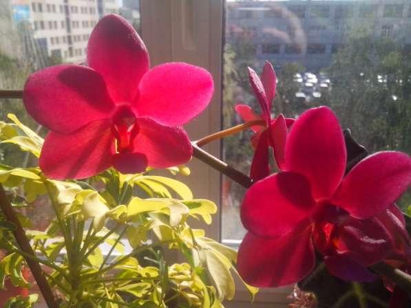 Растения для дома и офиса в Новосибирске фото 6
