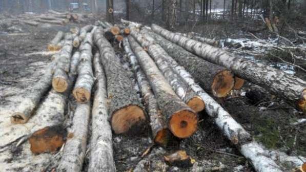 Круглый лес хвоя (зеленка, сухостой), береза, осина.