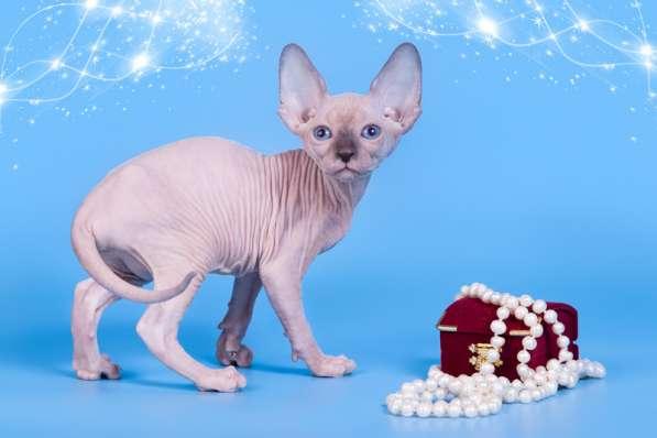 Бархатный котёнок с чувственной душой. в фото 4