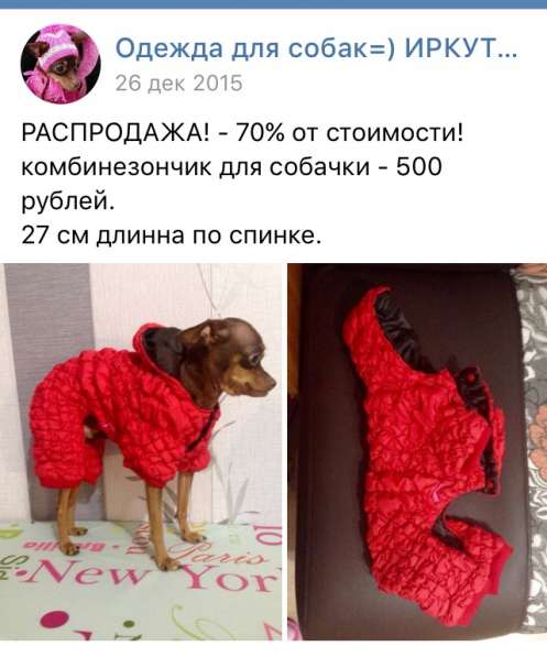 Одежда той-терьер собака щенок