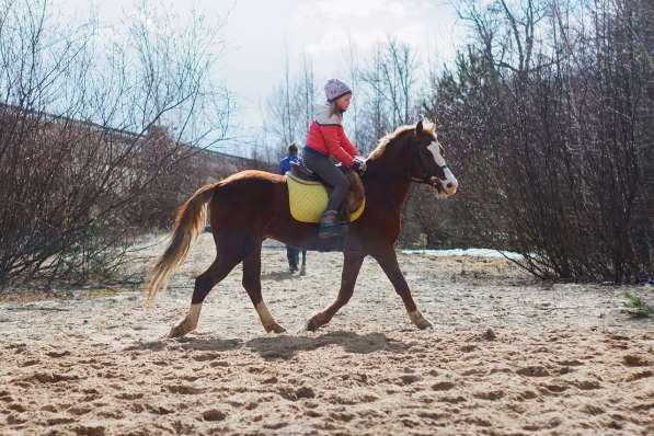 Уроки верховой езды.Обучение детей и взрослых. в Нижнем Новгороде