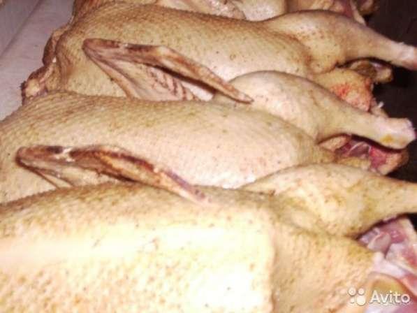 Домашнее мясо утки