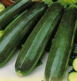 Продам семена кабачка сорта Аэронавт. Урожай 2015 года