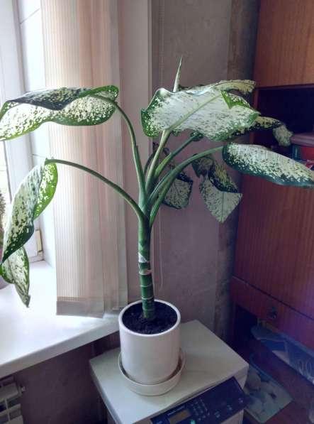 Растения для дома и офиса в Новосибирске фото 17