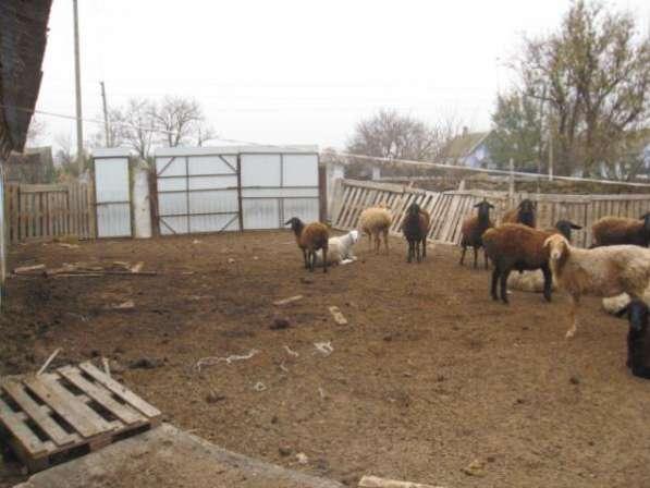 Обмен 2х домов с мини коровником на квартиру в Одессе в фото 10