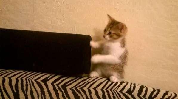 Котята к Новому Году хорошим людям