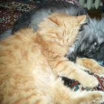 Котята на любой вкус, в Химках