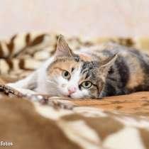 Кошка Мушка, в Москве