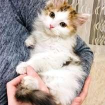Обалденный трехцветный котенок Ириска в добрые руки, в г.Москва