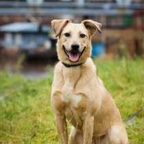 Послушная собака с высоким интеллектом ищет дом, в г.Санкт-Петербург