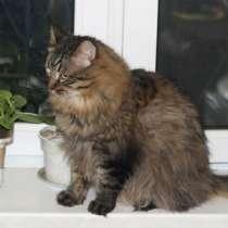 Роскошный домовитый котик Васенька в дар, в г.Москва