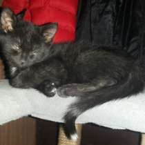 Котенку очень нужен любящий хозяин, в Подольске