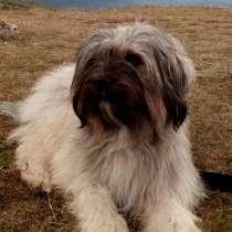 Красивые щеночки-метисы, в Симферополе