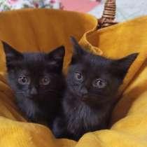 Черные котята, в г.Краснодар
