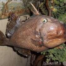 Чучела морских рыб для Дизайна, в Челябинске