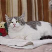 Котенок Тома, в Москве