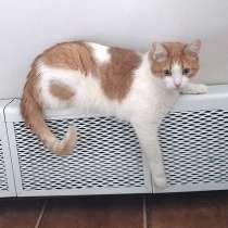 Ласковое солнышко Боня,домашний диванный котик в добрые руки, в Москве
