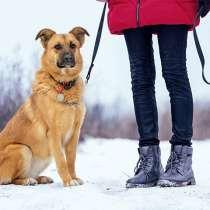 Ласковое солнышко Зита, молодая домашняя собачка в дар, в г.Москва