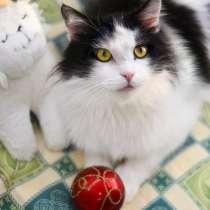 Пушистый неземной котик Космос ищет дом, в г.Москва